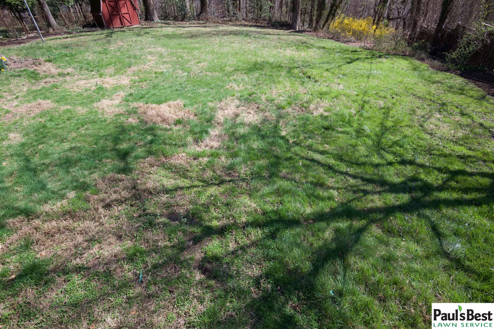 https://paulsbestlawn.com/pbls-img/portfolio/lawn-mowing-lawn-fertilization-and-treatment/before-and-after/web-ready/large/BALM1-b-After-2-Years-Turf-Care-and-Lawn-Maintenance-Arlington-VA.jpg