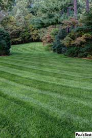 Mowing and Turf Program in Mclean VA | Front to Back Mowing Stripes on a Carpet Lawn
