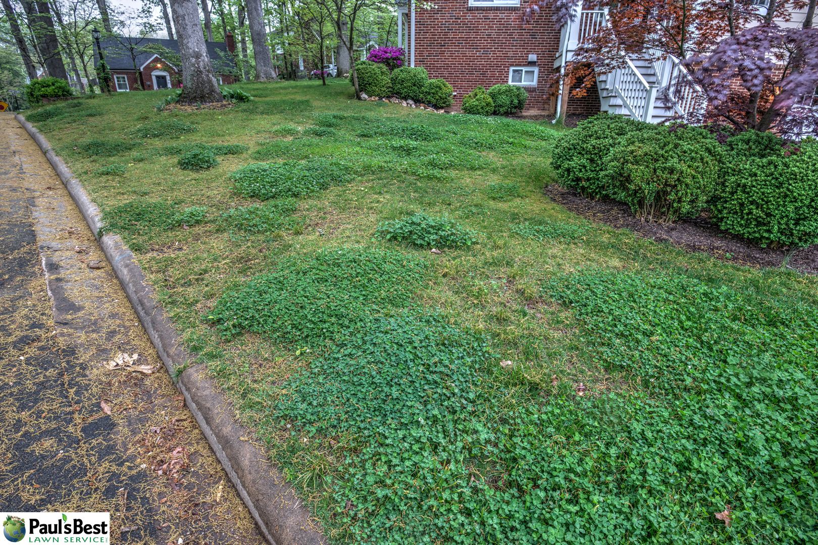 https://paulsbestlawn.com/pbls-img/portfolio/other-services/before-and-after/web-ready/large/BAOS1-l-After-Sodding-Front-Yard.jpg